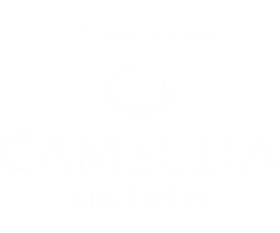 Camellia sinensis, thé, haut de gamme, nature, vert, sencha, pu'er